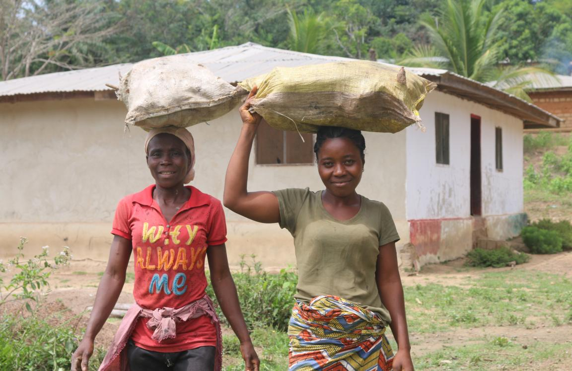 Carying the harvested Cassava root for Gari and Fufu processing.